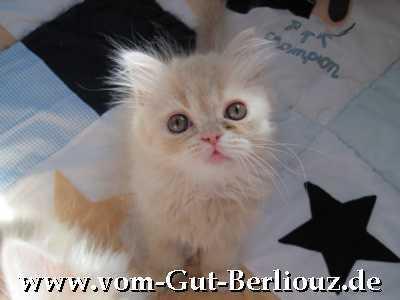 Perser mit Nase - vom Gut Berliouz - www.vom-gut-berliouz.de